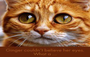 Pet Cat Story